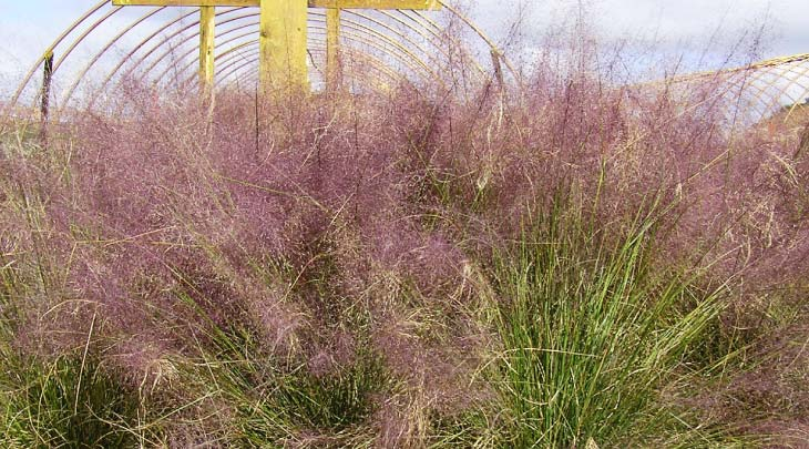 abby-farms-ornamental-grass