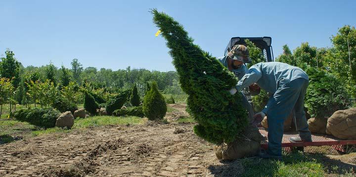 tree-digging