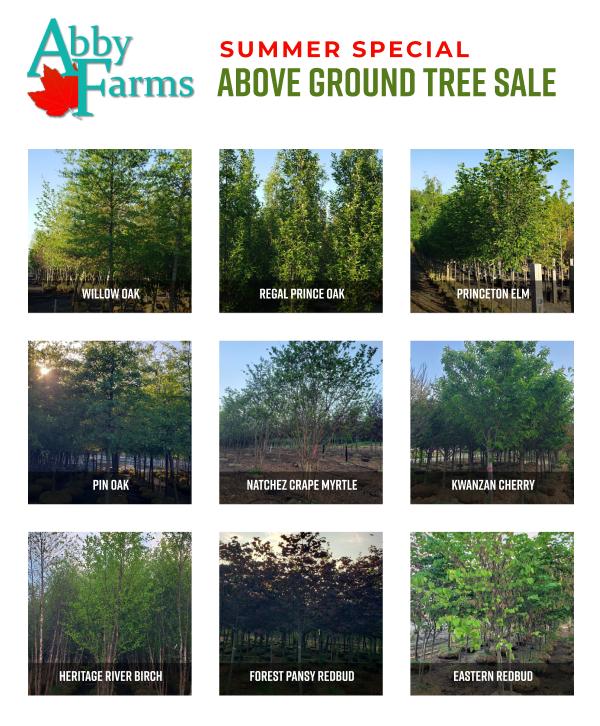 summer 2021 above ground tree sale