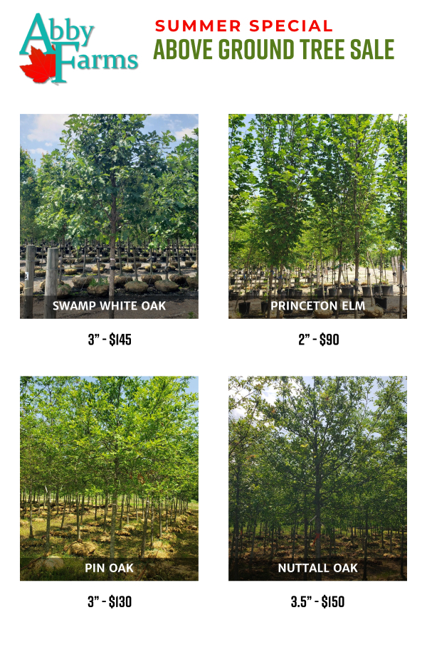 summer special 2021 - above ground tree sale